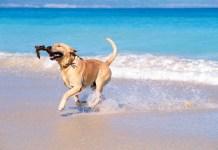 Viaggio di lavoro con cane