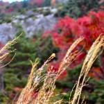 登山中に見かけたカメムシ。天狗の庭付近にて