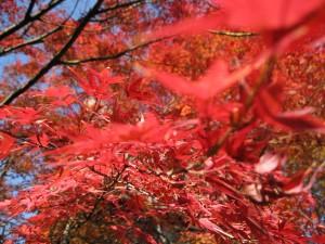 福島県立図書館の裏で撮影した紅葉(2008-11-14 撮影)