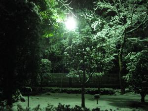 深夜に雪が降りました