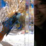 サンゴの水槽にいた、ニシキテグリ。とってもきれいでした!