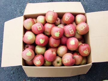 apple-apples.jpg