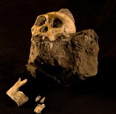 534 1 skull large.jpg