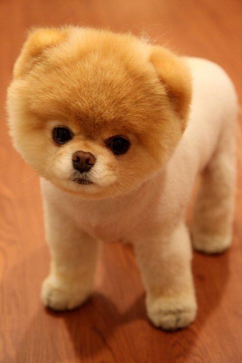 boo-dog.jpg