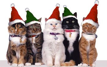 christmas-cats.jpg