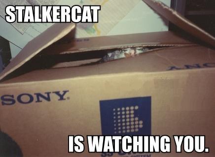 stalker-cat-watching.jpg