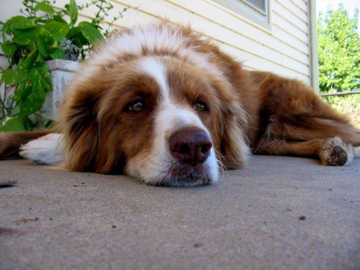 dogs-optimistic-or-pessimistic