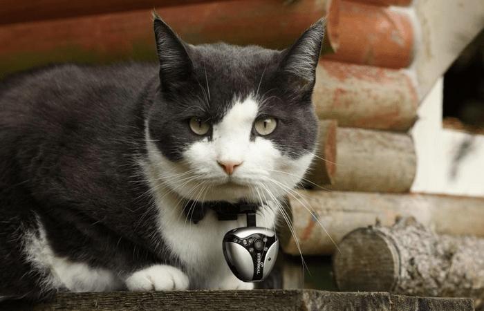 pet-wearables-eyenimal