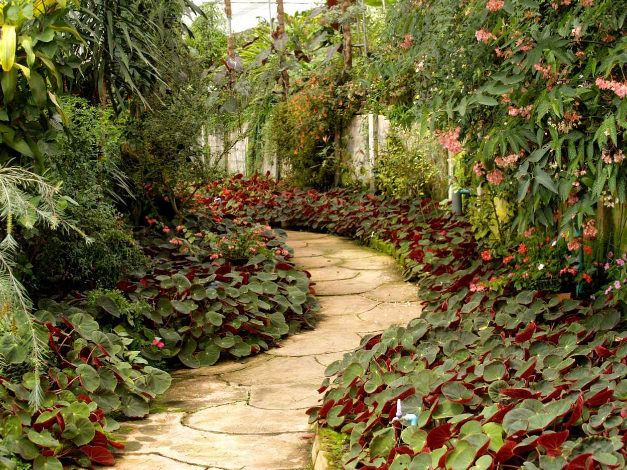 gardenpath.jpeg