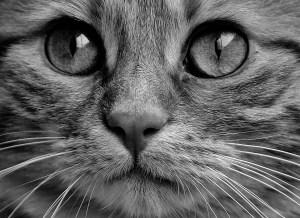 יום החתול הבינלאומי - החיים לפי שירלי - בלוג לייף סטייל והשראה