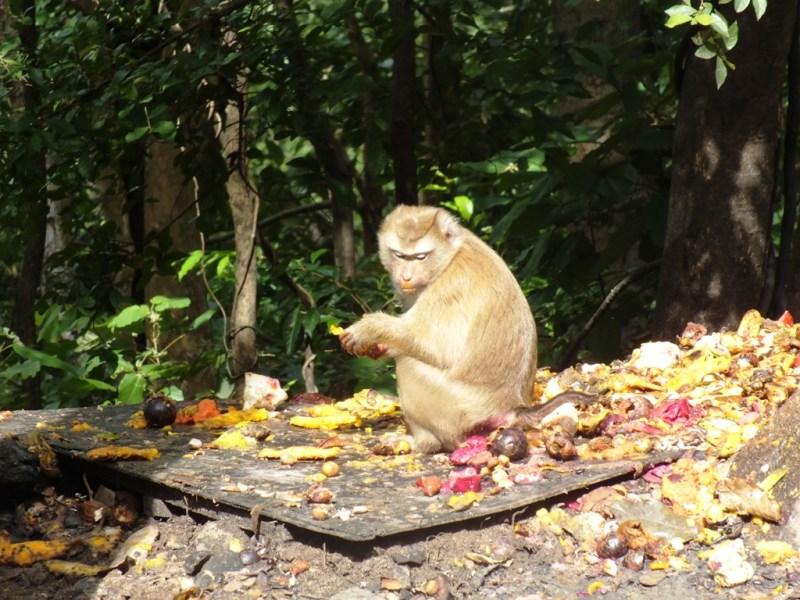 גבעת הקופים
