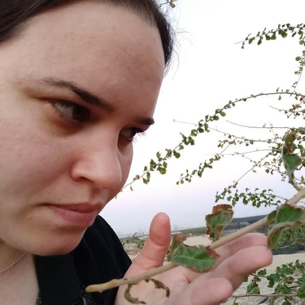 צמחי לבונה