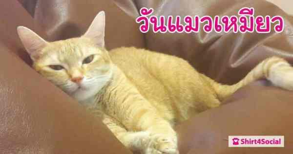 22 กุมภาพันธ์ วันแมวเหมียวของญี่ปุ่น