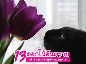 ดอกไม้อันตรายกับแมว