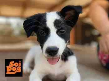 บริจาคช่วยสุนัขในมูลนิธิเพื่อสุนัขในซอย พ.ค.63