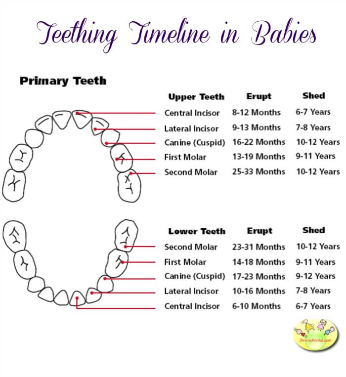 Teething Chart in Babies