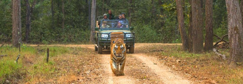 Jungle Safari In Nepal | Shivam Holidays