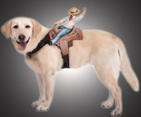 Picture Of Monkey Pet Rider Costume