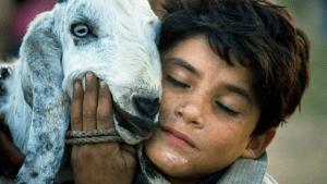 why muslims sacrifice animals on edi al-adha