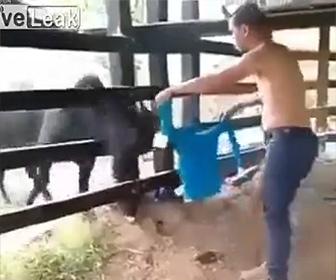 【動画】男性が柵越しに服を振って牛をからかうが…後悔する事になる