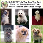 Shared Blog Post – Is Your Dog Your Best Friend or a Family Member? If Yes, Then Please Join Me and Take the Shock-Free Pledge