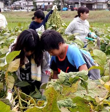 黒枝豆収穫体験ツアー フジッコ