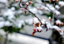 春は名のみの風の寒さや