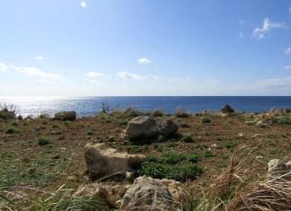 海から押し上げられた岩石が散らばる畑(徳之島)