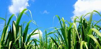 今年の砂糖 TPP、日EU・EPA発効 激動の平成から波乱含みの新時代へ