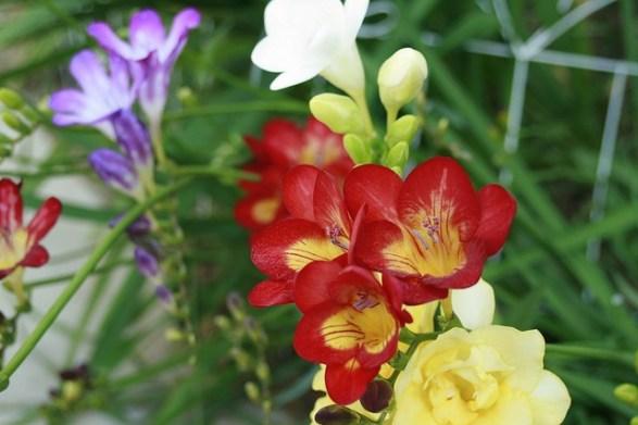 12月17日の誕生花と花言葉です。 - とことこ湘南