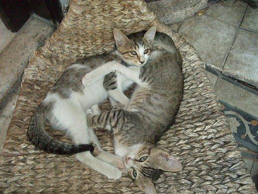 חתלתולים מחפשים בית