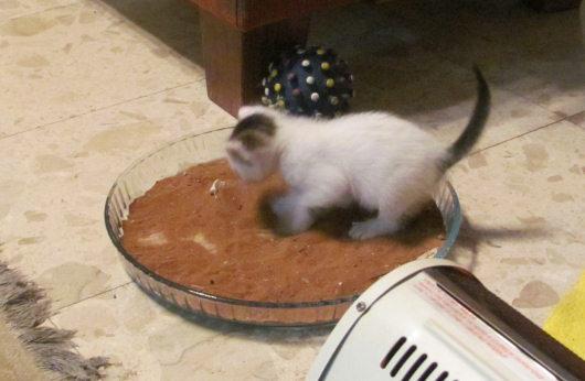 קיטי, מחפשת בית