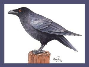 CrowSml