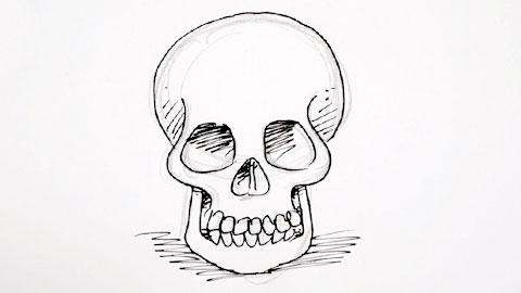 skeleton   Shoo Rayner