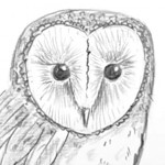 How-to-Draw-a-Barn-Owl-small