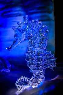 Ice Kingdom (3)