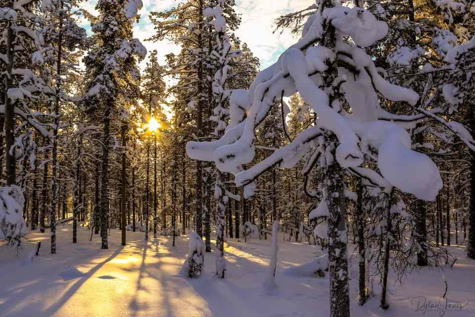 The trees casting long shadows in the forest near Kakslauttanen East Village