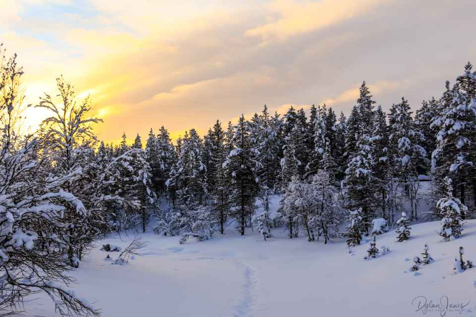 The frozen river and forest at sunrise at Kakslauttanen East Village