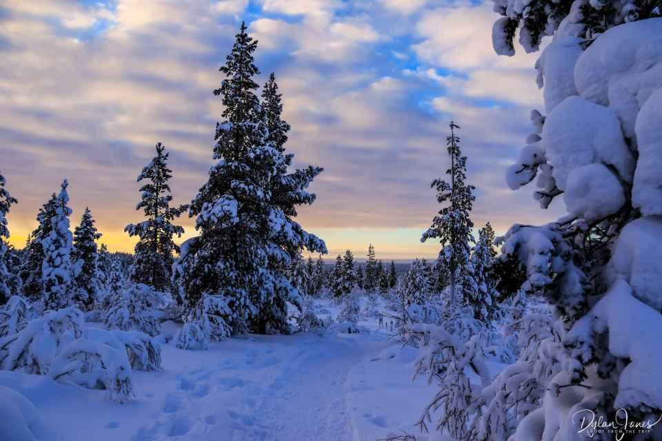 The hiking trail snaking around the trees at the Kiilopää Fell, Saariselkä Lapland