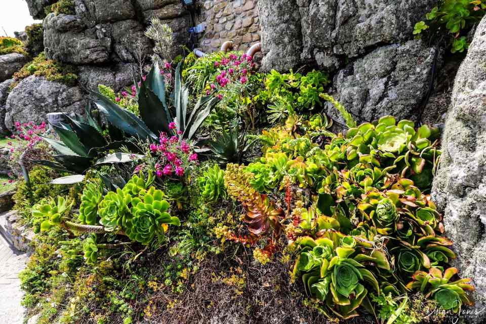 Sub-tropical planting at the Minack Theatre, South Cornwall coast