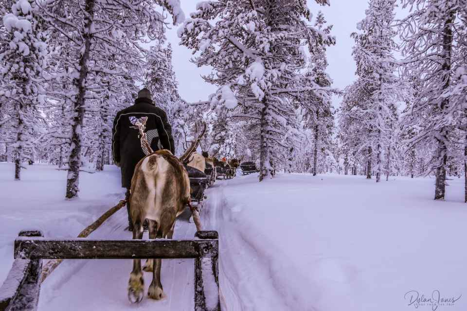A gentle reindeer sleigh ride through the forests, Saariselkä Lapland