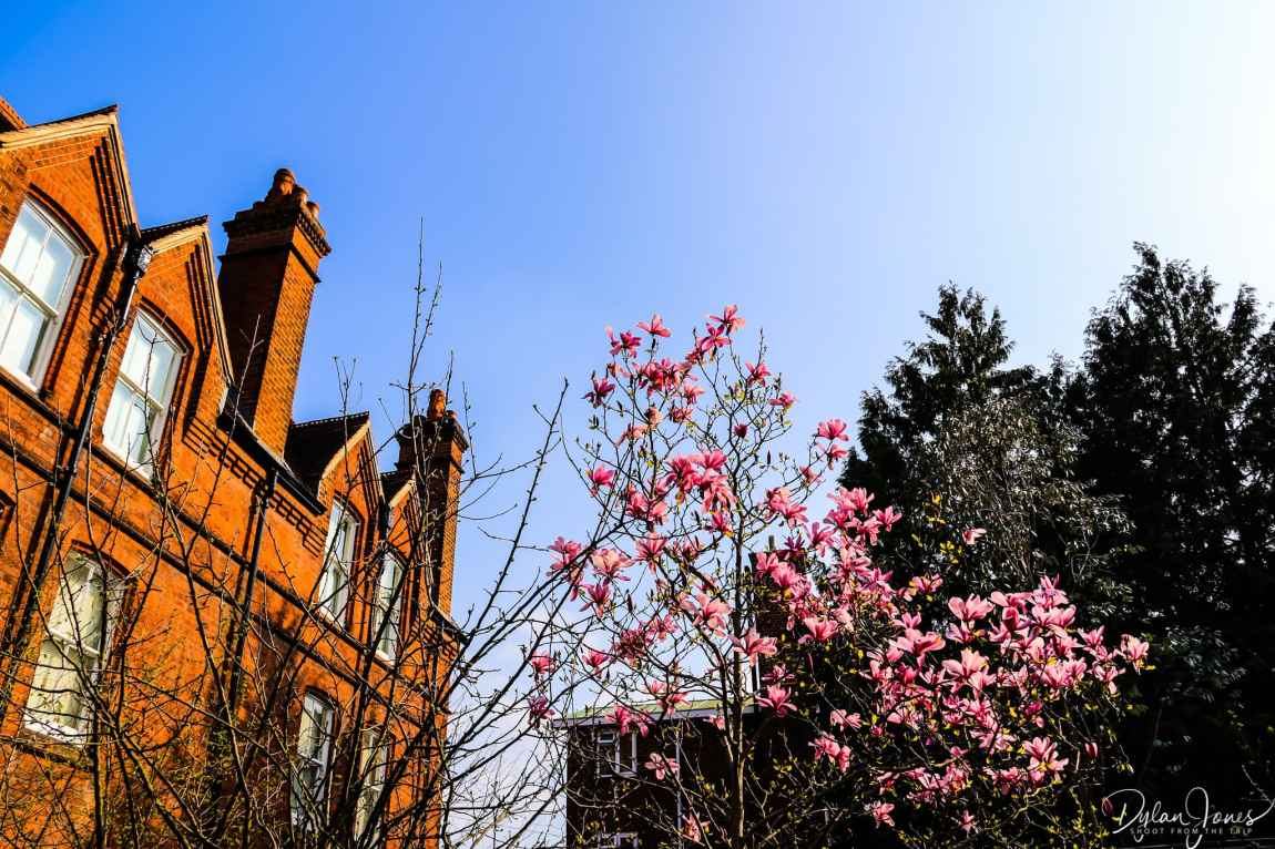 Beautiful architecture and magnolia on a spring day at The MERL