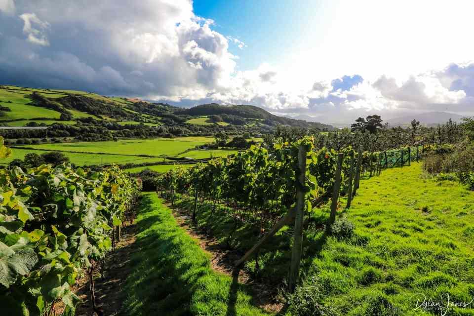 Gwinllan Conwy views