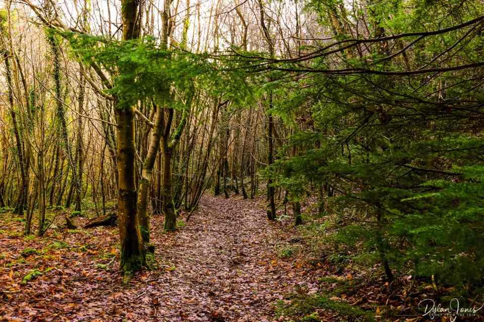 Winter woodland pathways on the way to Cadair Ifan Goch