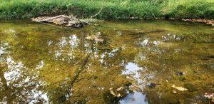 A creek in Gainesville, VA