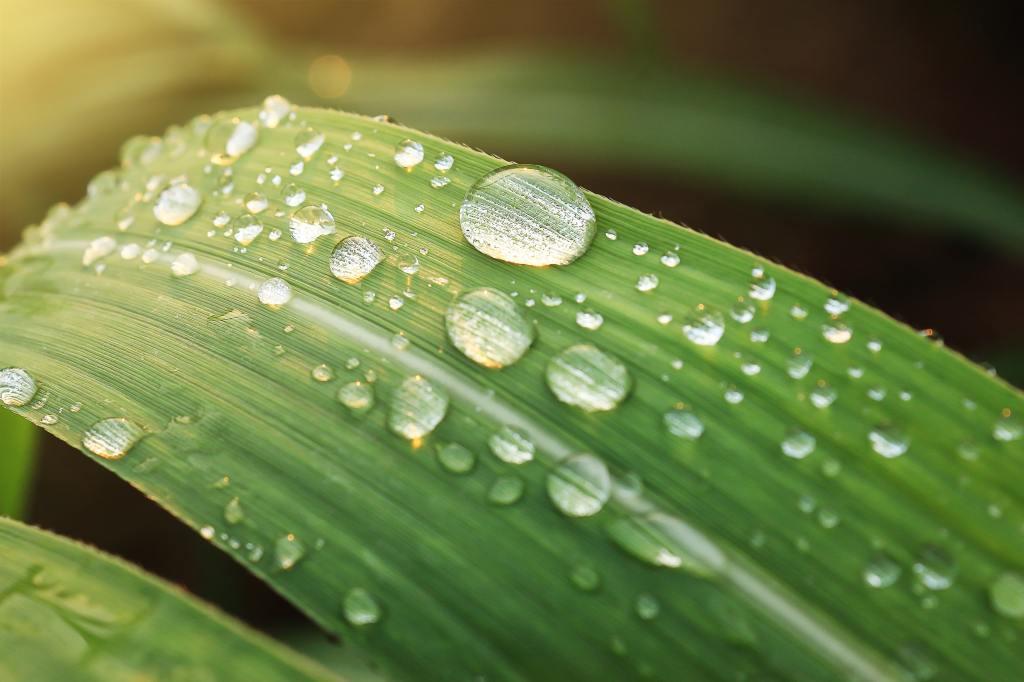 Rain droplets on green leaves