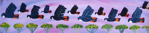 Black Cockatoo image