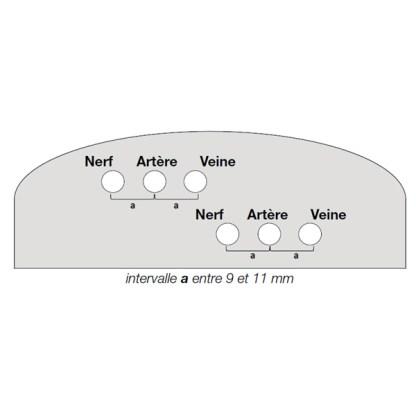 schéma coupe fantôme nerf artère veine