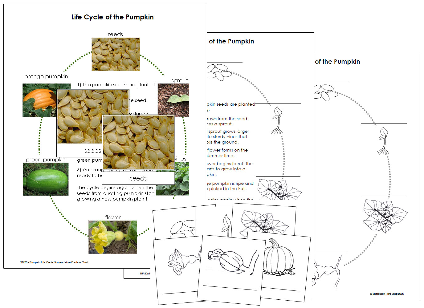 hight resolution of diagram of pumpkin life cycle