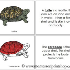 Turtle Shell Anatomy Diagram Mopar Ecu Wiring Parts Of A Pictures To Pin On Pinterest - Pinsdaddy